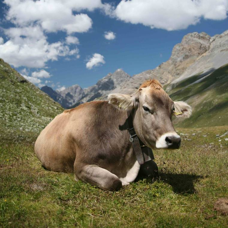 mucca-cow-nature-bio-home.jpg